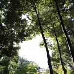 徳川園の木々